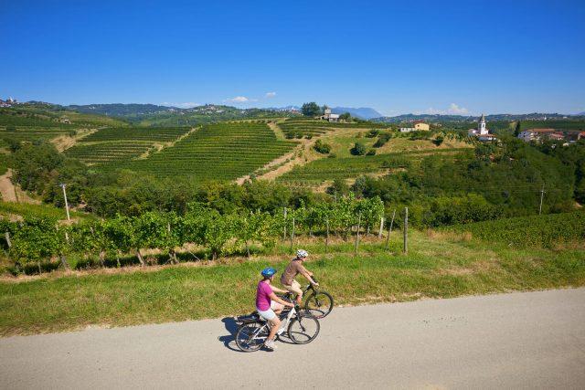 kolesarjenje-med-vinogradi