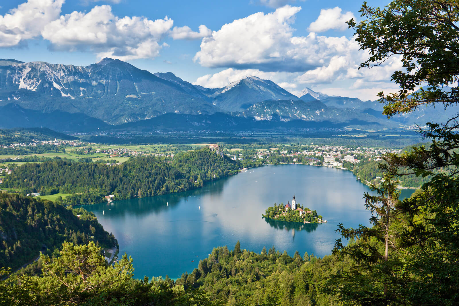 bled-forest-nature-spring-holiday