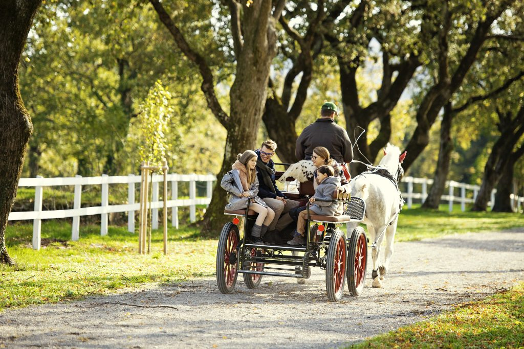 lipizza carriage ride horses event